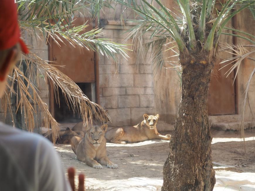 zoo abu dhabi